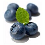 블루베리 (Blueberry F.O)